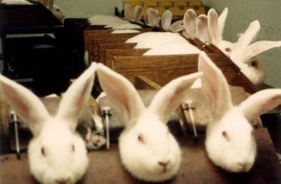 Internet je velik eksperiment, uporabniki pa poskusni zajčki ...